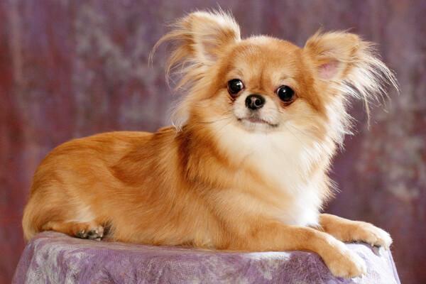 Стерилизация собаки плюсы и минусы в каком возрасте лучше делать